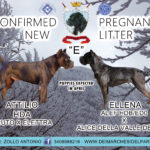 "🎉🎉🎉New Litter ""E"" Dei Marchesi Del Partenio Kennel 🎉🎉🎉"