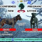 News Litter C Dei Marchesi Del Partenio