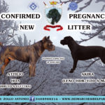 "New Litter ""D"" Dei Marchesi Del Partenio Kennel"